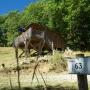 Verhuur glamping houten cabane in de Midi-Pyrenees - Occitanië Ariege, Frankrijk : rustige omgeving