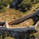 Castell càtar de Montségur a Migdia-Pirineus Occitània