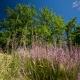 Afavorir la biodiversitat i protegir l'ecosistema al càmping a Occitània