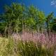 Favoriser la biodiversité et préserver l'écosystème au camping en Occitanie