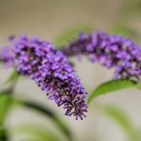 Càmping de natura orgullós de la flora Ariege Occitanie