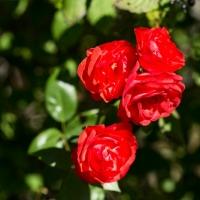 Natuurcamping met liefde voor bloemen in Ariège Occitanie