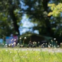 Zeer ruime, vrijstaande plaatsen voor tenten en campers in Ariège, Occitanië